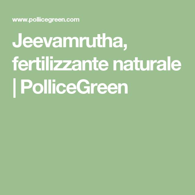 Jeevamrutha, fertilizzante naturale | PolliceGreen