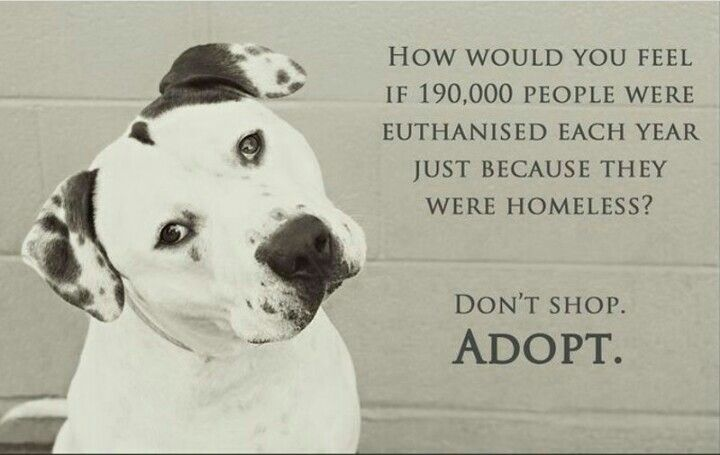 Adopt shelter dog quotes dog quotes animal advocacy
