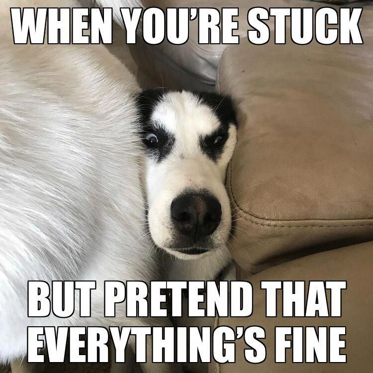 Nothing 2 See Here Move Along Huskymemes Dog Quotes Funny Funny Husky Meme Husky Funny
