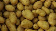 How to Start a Potato Plant From a Cut Potato #patiodepapas