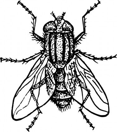 Flies Clip Art House Fly Vector Clip Art Free Vector For Free