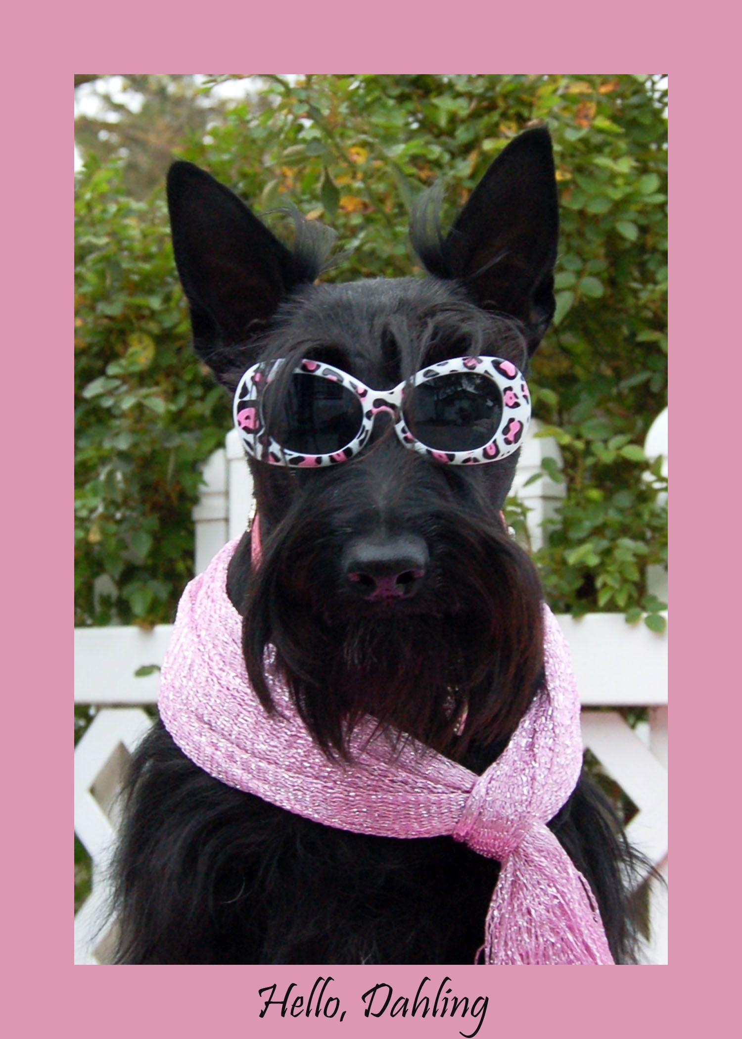 Ellie mcqueen hello dahling scottie dog scottie