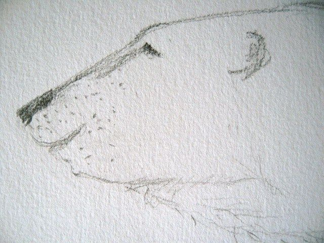 Zeichnen: Poesie des Bleistifts – Creative club