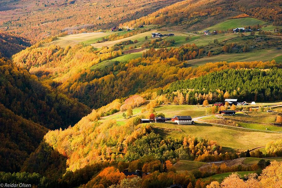 ***Farming in the mountains by Reidar Olsen (Norway)