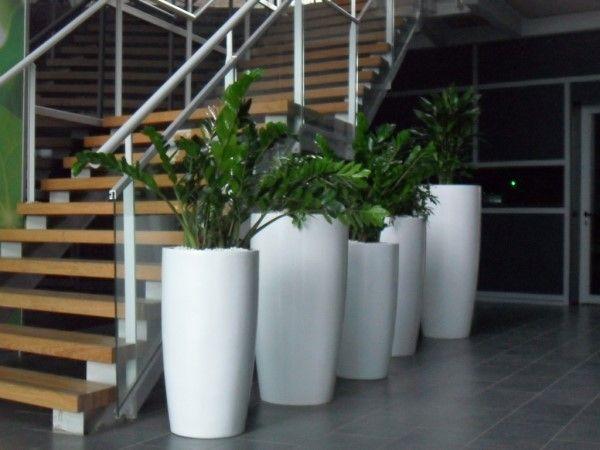 ZZ plant in white Cylik Planter | PlantFinderPro