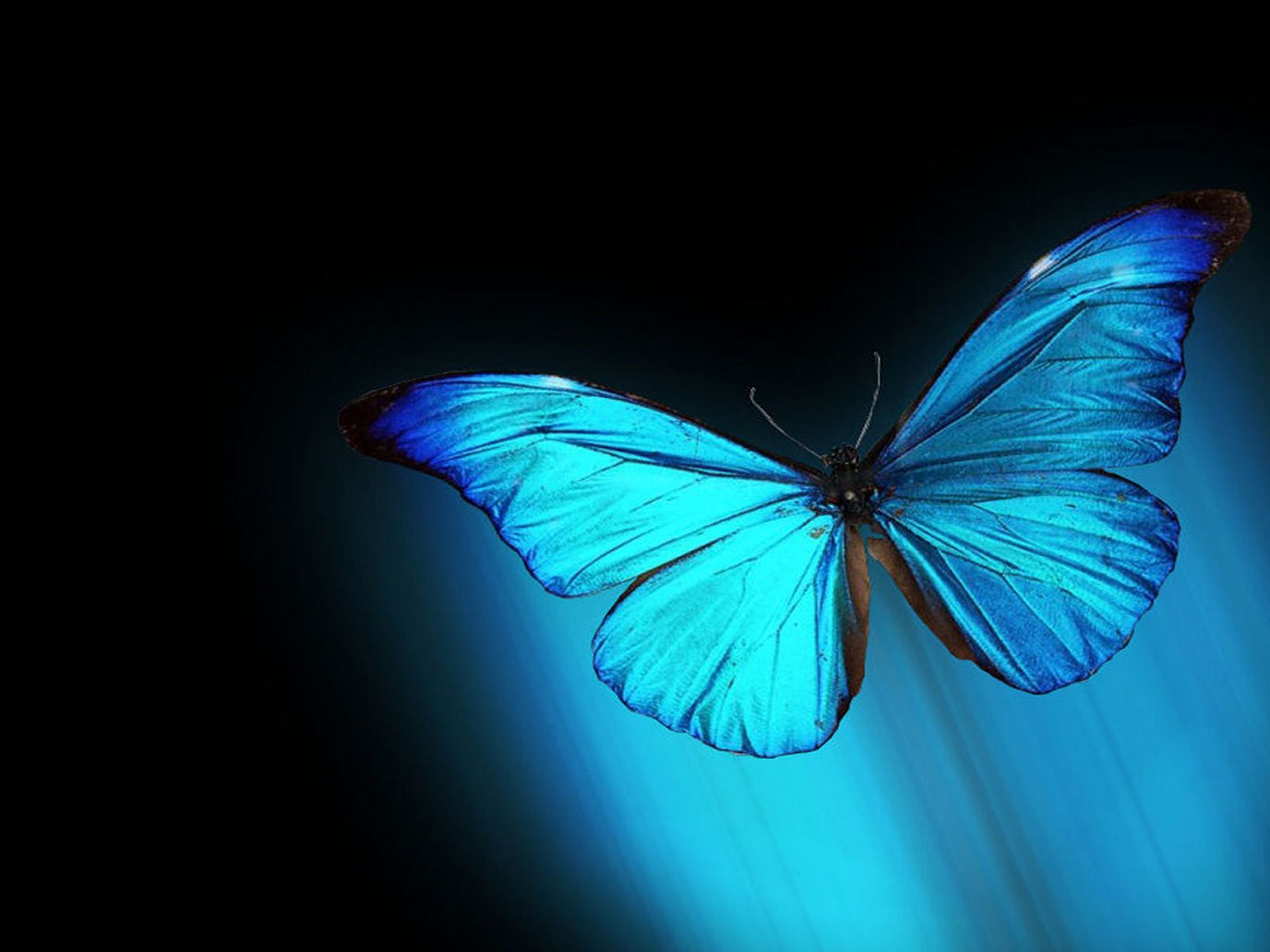 Top 14 most beautiful butterflies in the world amazing colors butterflies are one of a lot of varied as well as attractive insects worldwide the buycottarizona