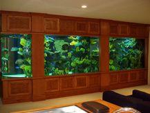 Living Art Aquatic Design   Custom Aquariums, Reefs, Ponds, Waterfalls And  Maintenance