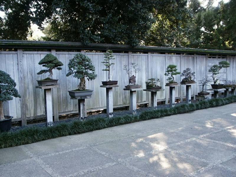 bonsai b ume zur schau stellen auf s ulen aussen pinterest bonsai baum baum und zen g rten. Black Bedroom Furniture Sets. Home Design Ideas