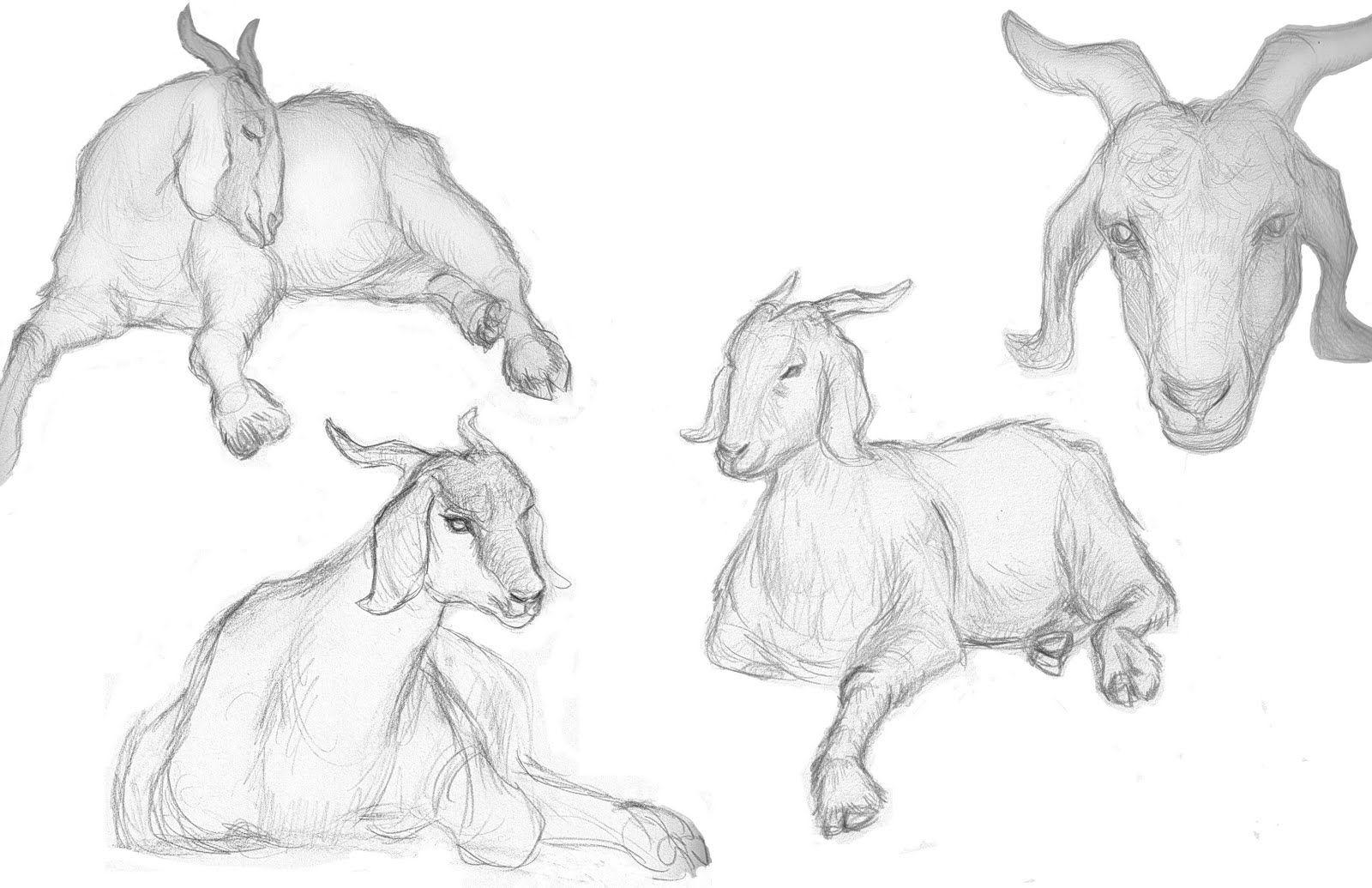 козел картинки как рисовать