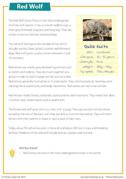 PrimaryLeap.co.uk - Reading Comprehension - Red Wolf ...