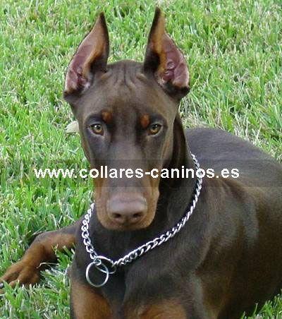 Tipos De Collares De Castigo Para Perros Collar Canino Inoxidable Endurecer El Acero Perros Collares