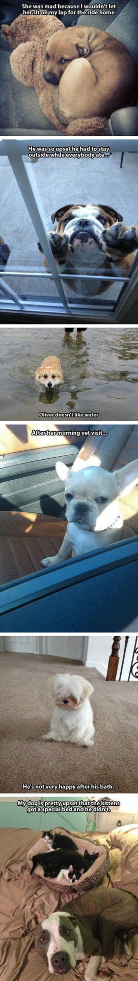 Meme My Day Love This Pic Dot Com Dogs Who Are Mad At Their Cute Animals Funny Animals Funny Animal Pictures