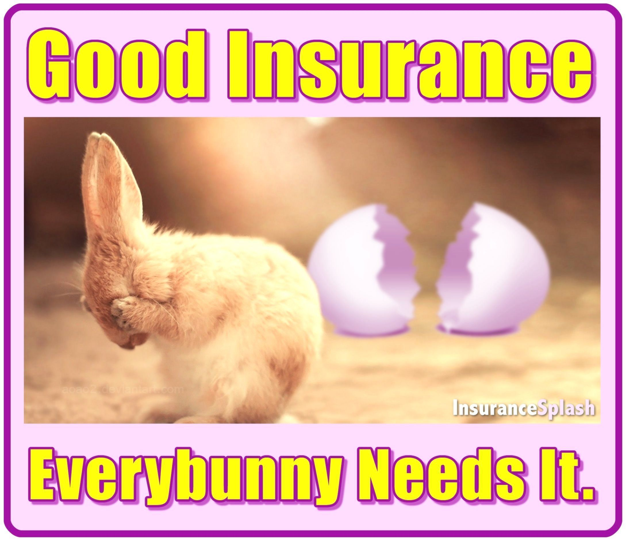 Latest Photos Insurance Humor Agent So True Explore Berry