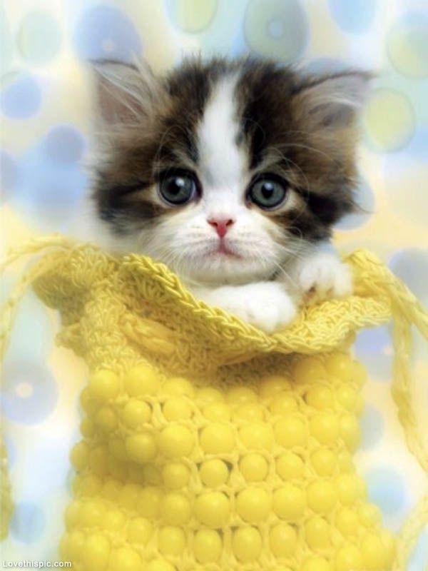 Sweet Baby Kitten cute animals sweet cat yellow pets