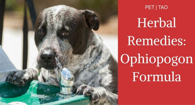 Ophiopogon Powder Remedy For Dog Cushing Disease Cushing