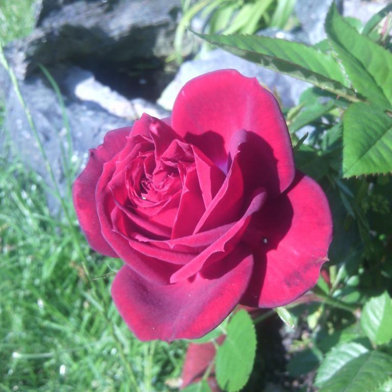 """Tableau photo sur toile 20x20cm """"rose"""" 68"""