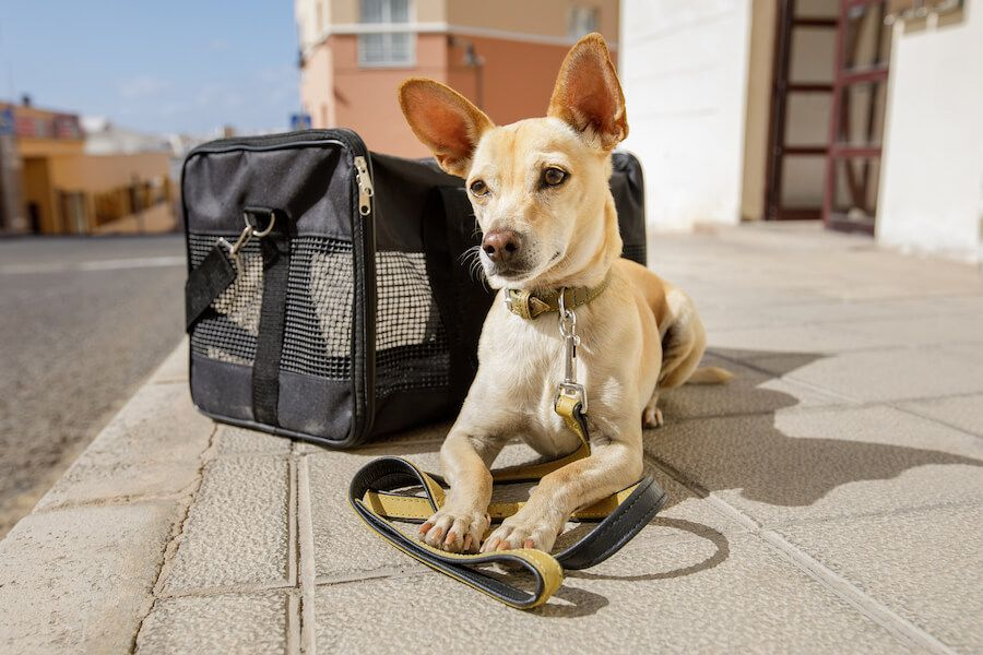 11 Things To Consider Before Traveling And Moving Abroad With Your Dog Emotional Support Animal Best Small Dogs Pet Carriers