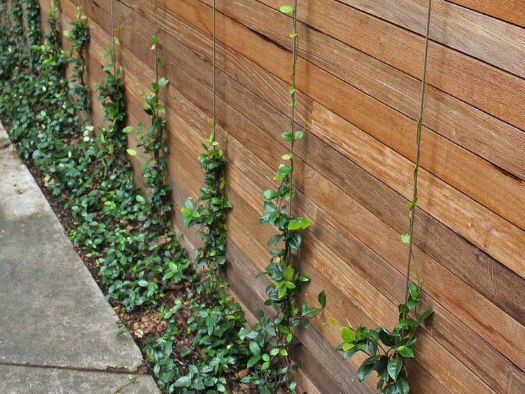 Wall Climbing Vines