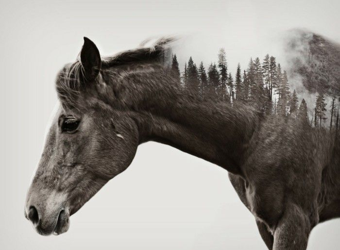 Schöne Zeichnungen schöne pferde bilder mit mehrfachbelichtung schöne bilder machen