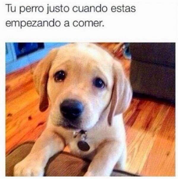 Memes La Cara De Tu Perro Funny Dog Faces Funny Dogs Labrador Funny