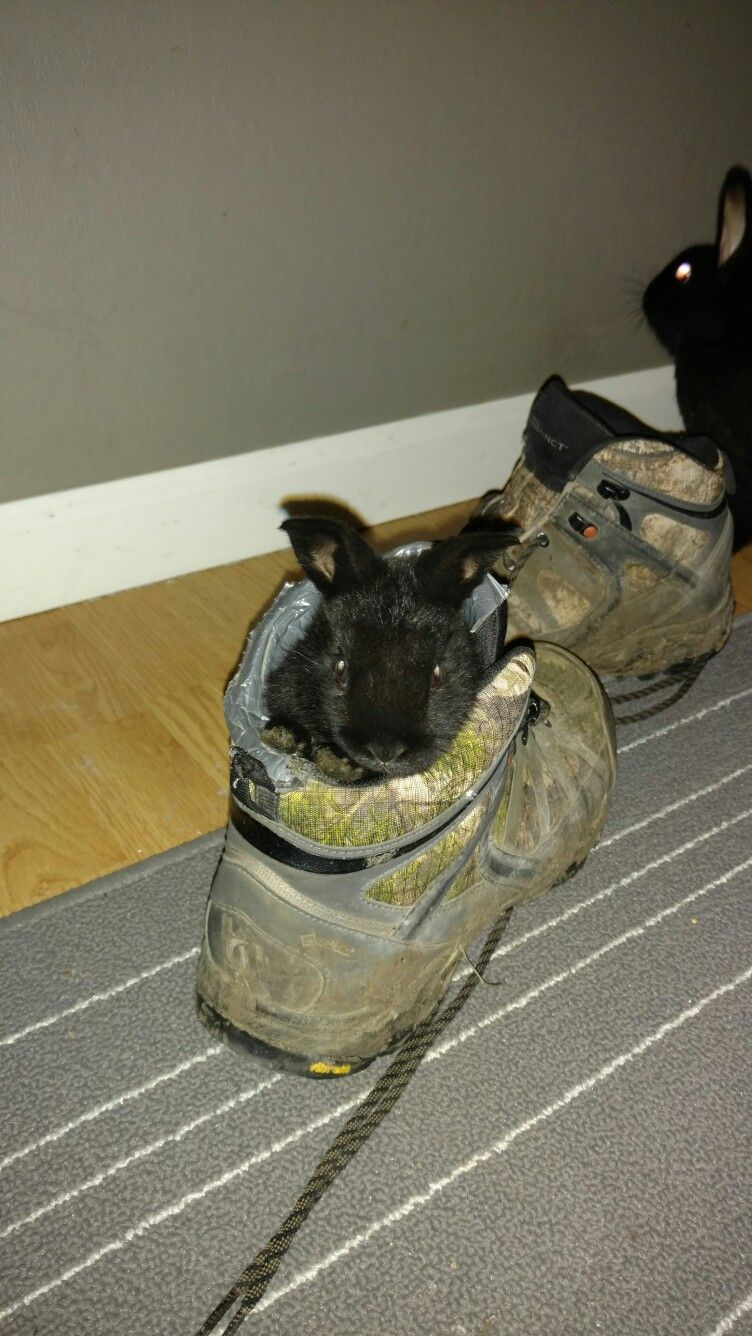 Bunny in a shoe