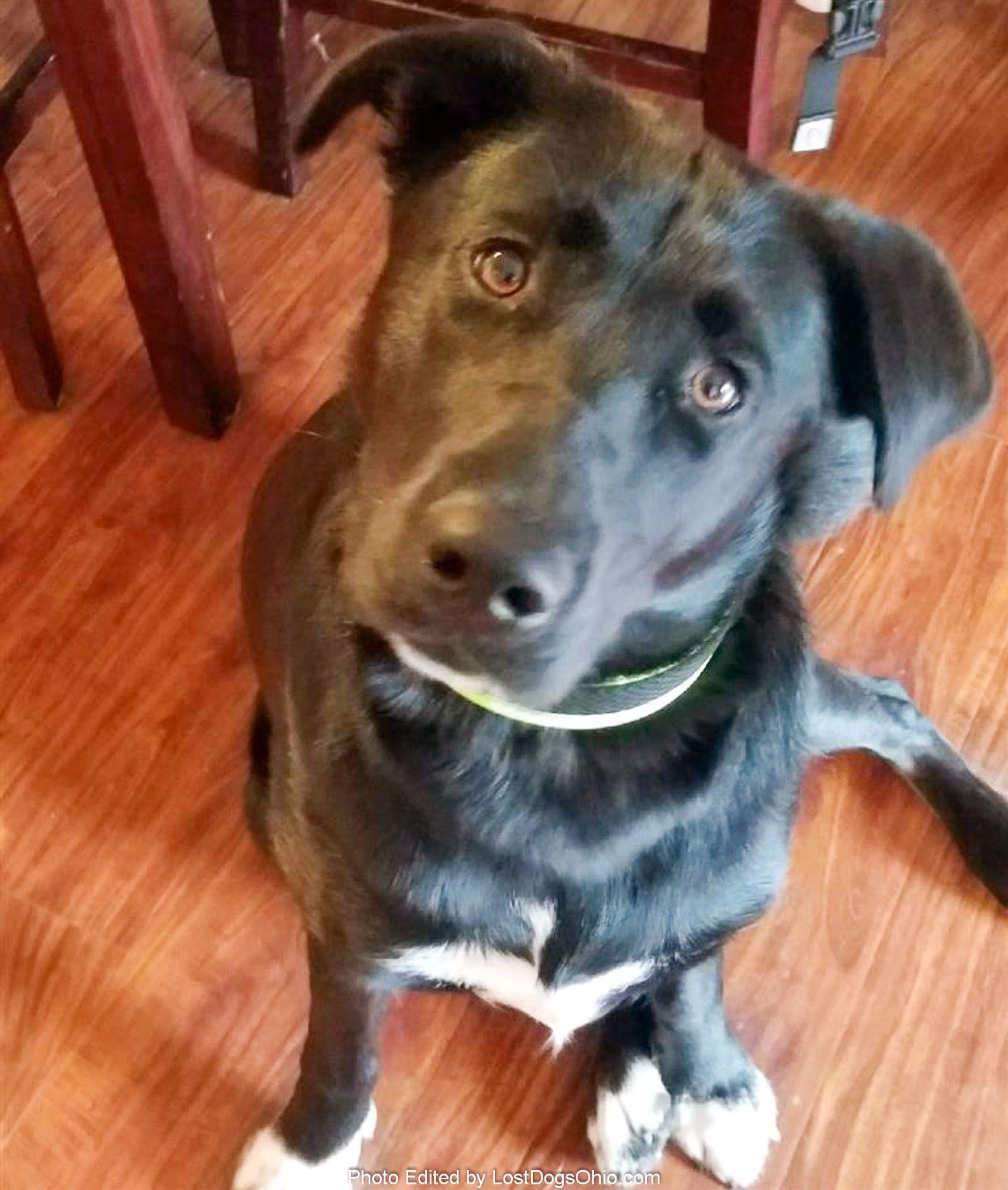 Youngstown Ohio Pets On Craigslist - DECRAIGS
