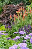Fackellilien (Kniphofia), Berufkräuter (Erigeron) und Salbei (Salvia)
