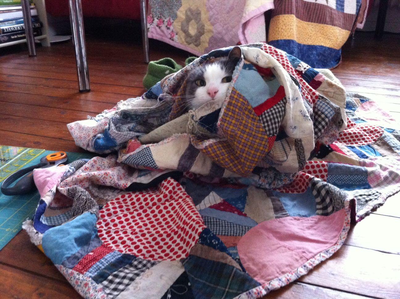 Sesión felina de patchwork