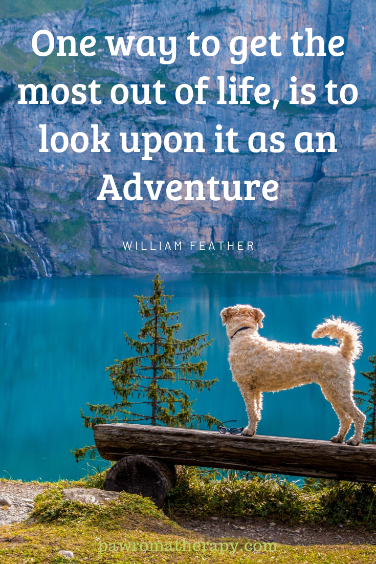 Life Is An Adventure Especially When Our Dog Is At Our Side Shop Handcrafted Natural Healing Products For Pets Dog Adventure Road Trip With Dog Dog Gifts
