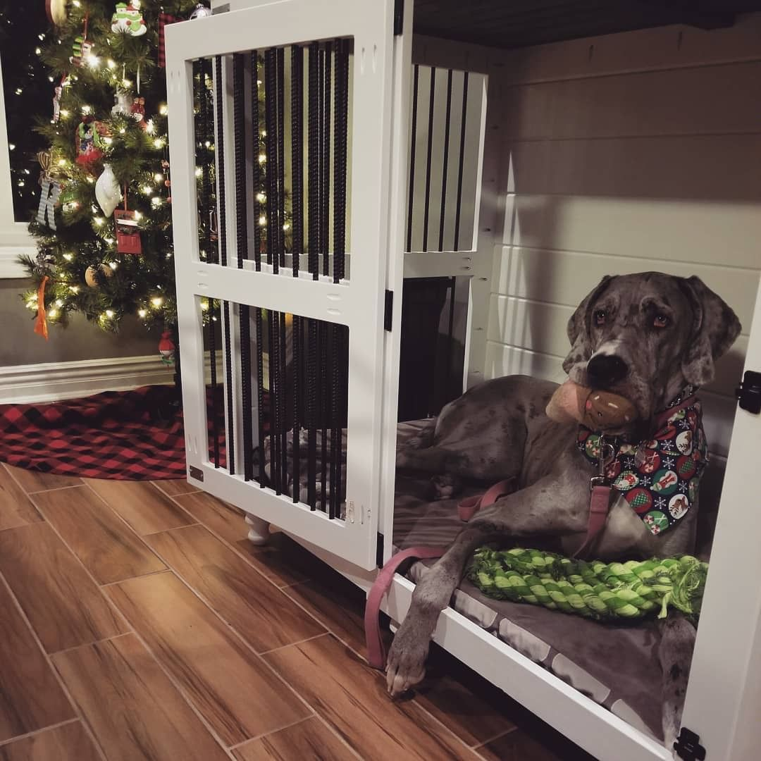 A Great Dane Kennel Is A Great Place To Take In The Christmas Tree