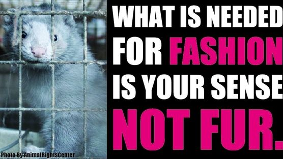Shimamura Co Ltd Stop Japan S Fast Fashion Brand Shimamura