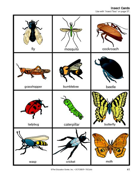 Insect Cards The Mailbox Insects Preschool Insects Insect Activities Types of bugs for preschoolers