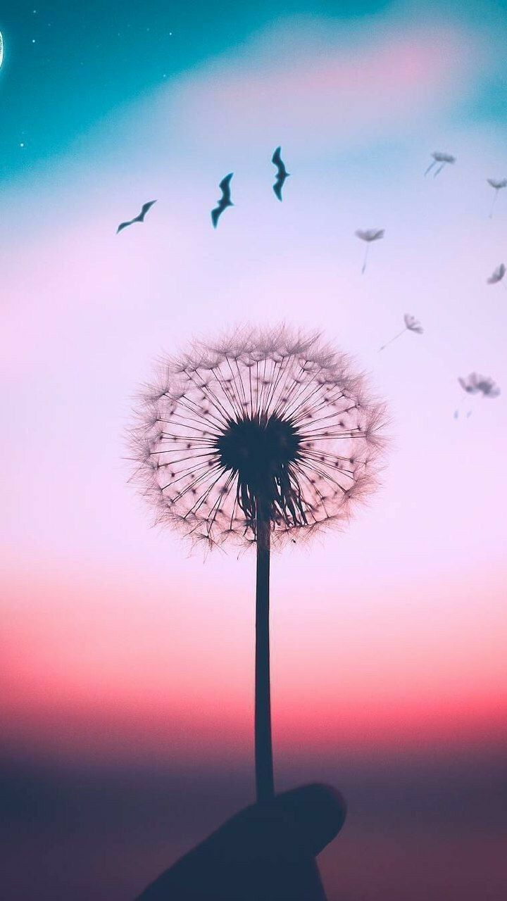 Get Latest Flowers Phone Wallpaper HD 2020 by haveliwale.com