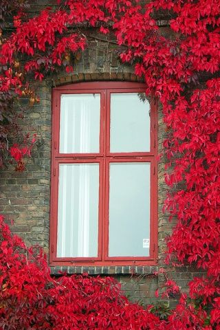 Red window iphone wallpaper it 39 s all about the red pinterest window wallpaper and doors - Finestre all americana ...