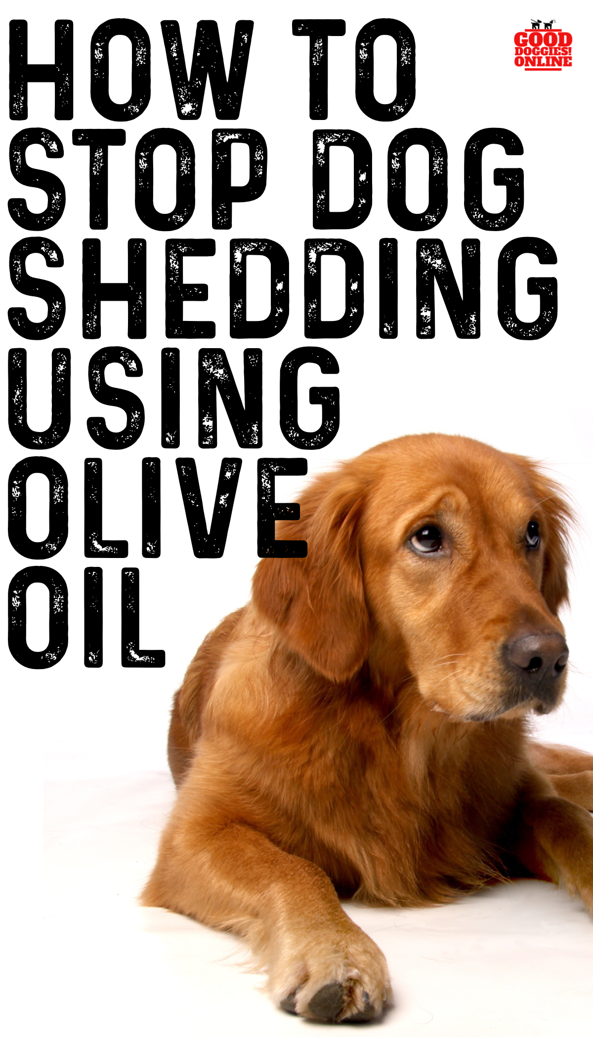 How To Stop A Dog From Shedding Using Olive Oil Good Doggies Online Stop Dog Shedding Dog Remedies Dog Shedding