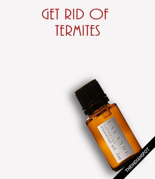 Home Remedies To Get Rid Of Termites Termite Treatment Termites Termite Control
