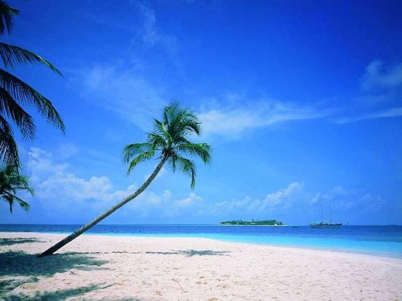 Image plage paradisiaque cocotiers cocotier iles ile - Palmier cocotier ...