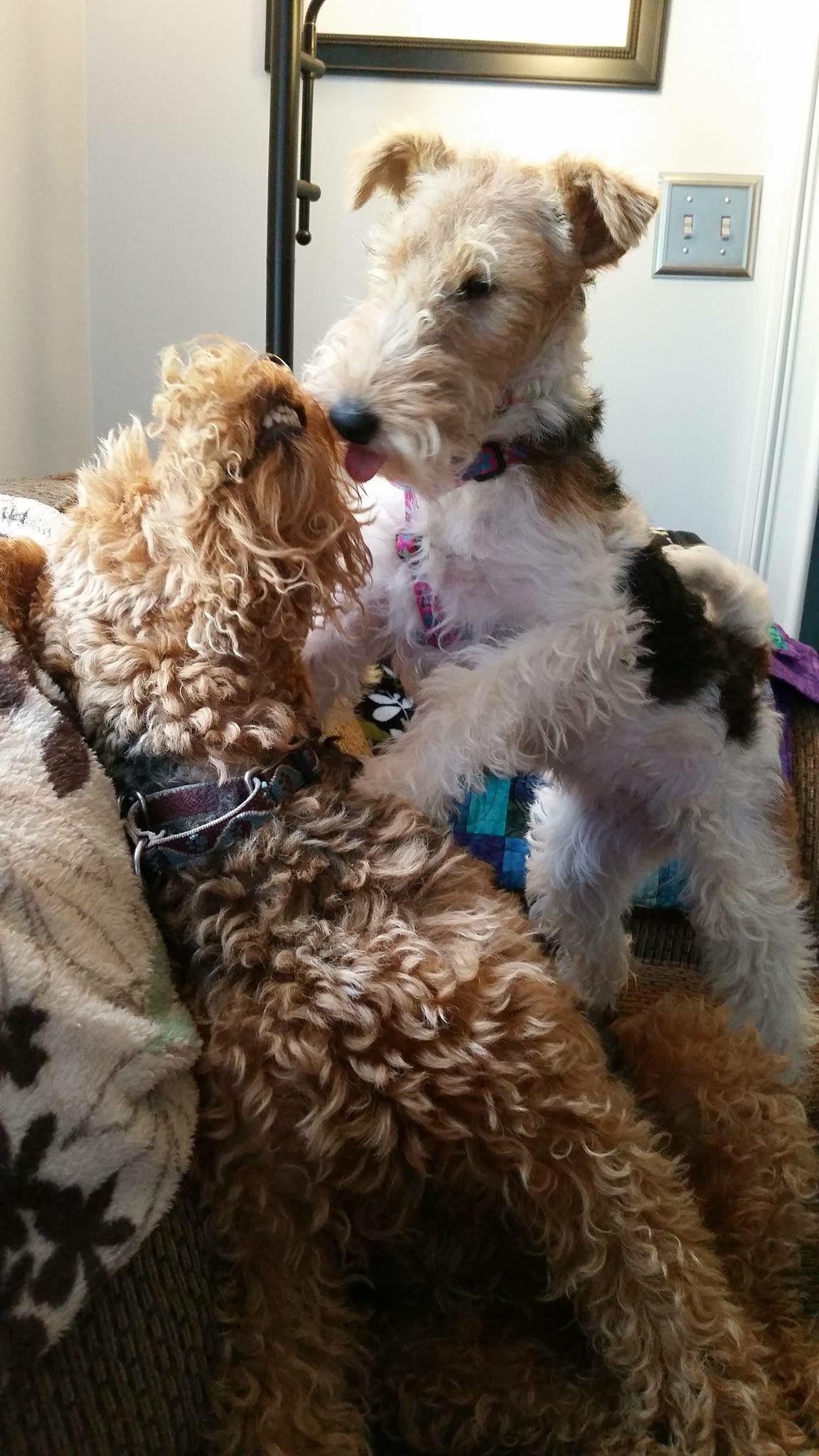 Terrier love. None purer !   Terrier mix   Pinterest   Hunde ...