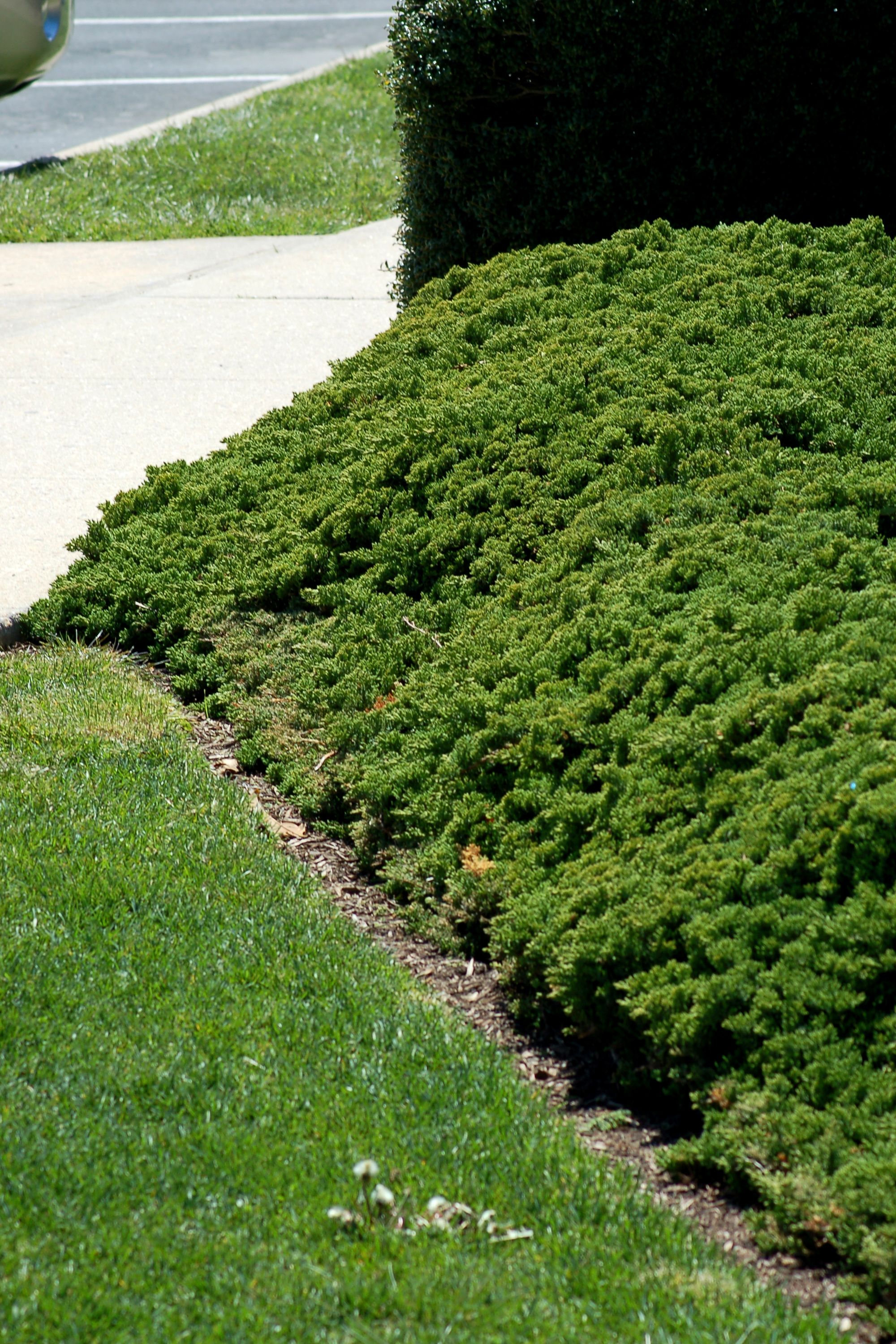 How to plant ground cover on steep bank - Landscaping Steep Slopes Creeping Juniper Is Manageable Enough To Grow In The Front Yard