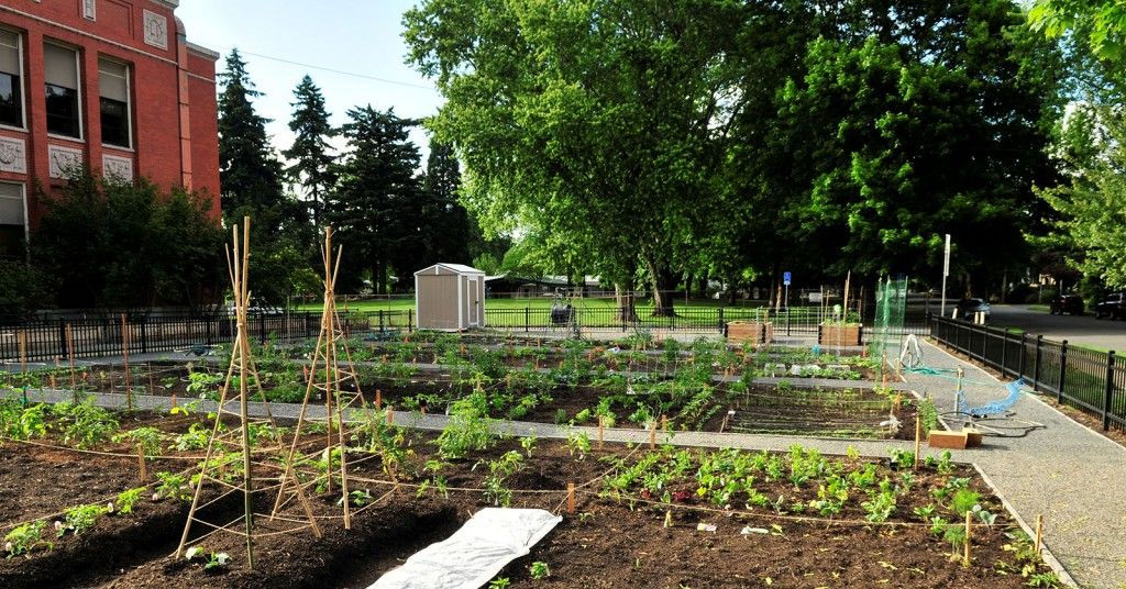 Portland Community Garden Grant High School | Community Gardens