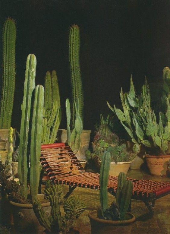 starting now rota plants cactus y succulents. Black Bedroom Furniture Sets. Home Design Ideas