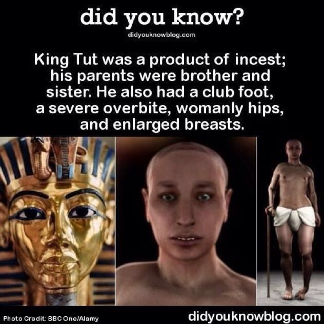 King Tut Ifk How Accurate The Product Pf Insest Was Unless The Minor His Father Impregnated Was His Aunt But He Did Marry His Step Sister Though