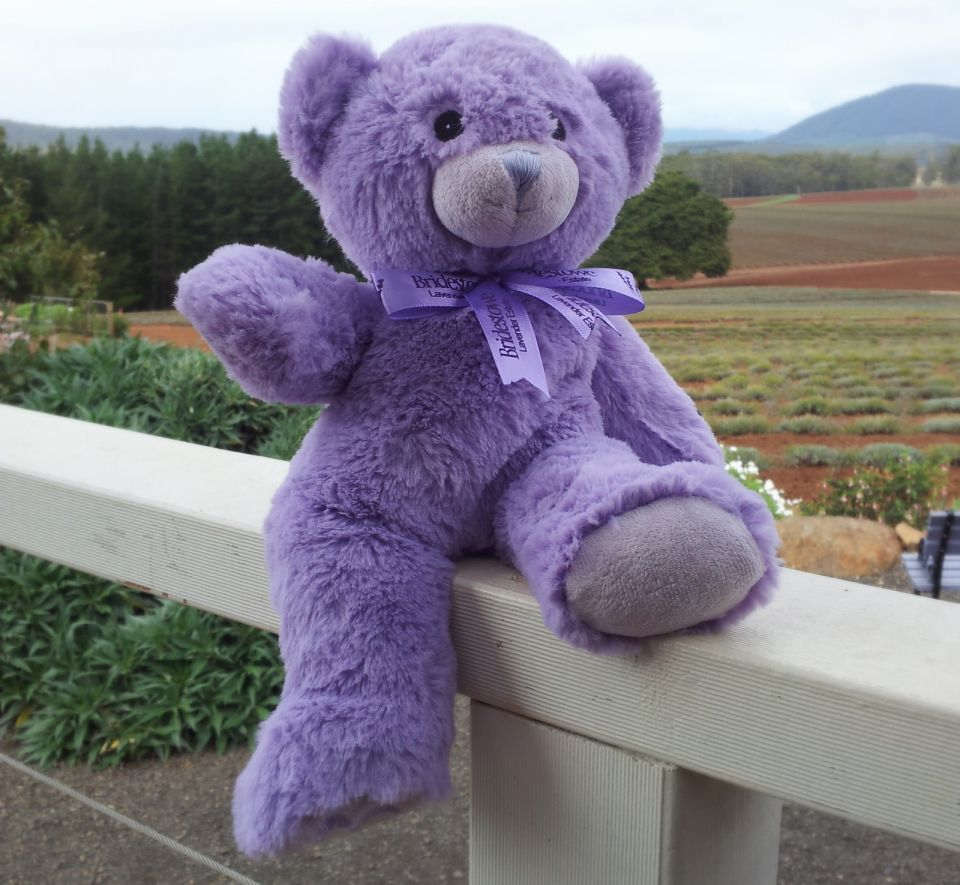 lavender teddy bear lavender coloured teddy bear toy scented with bridestowe lavender