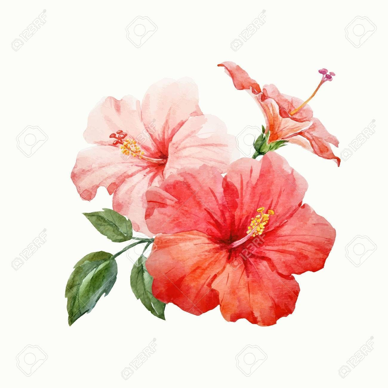 Watercolor Vector Tropical Hibiscus Flower Watercolor Vector Tropical Hibiscus Flower Royalty Free Cl In 2020 Hibiscus Drawing Hibiscus Flower Drawing Flower Drawing