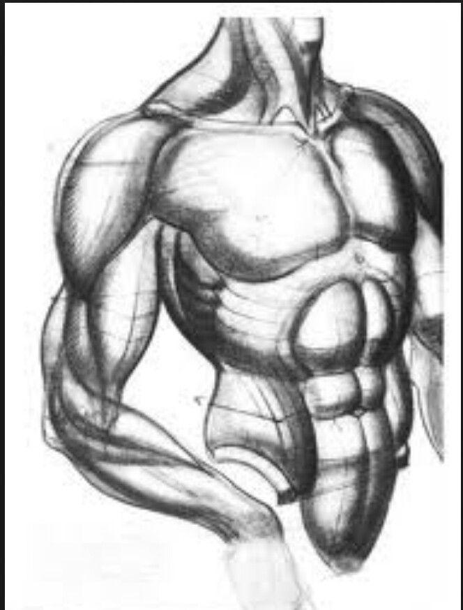Pin de Walquir Fagundes en anatomia | Pinterest | Huesos y Anatomía
