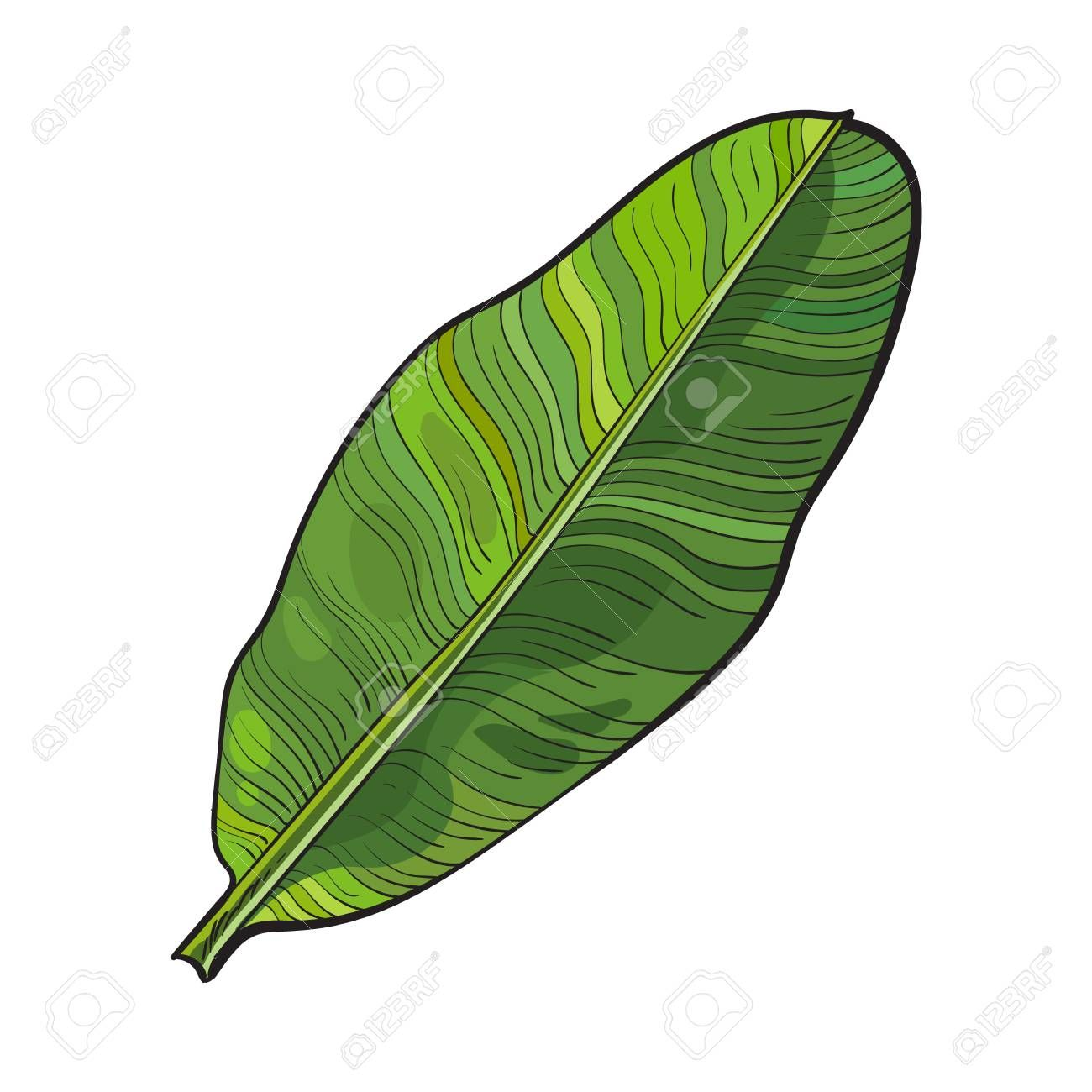 Apprendre Dessiner Plante Avec Feuille De Bananier