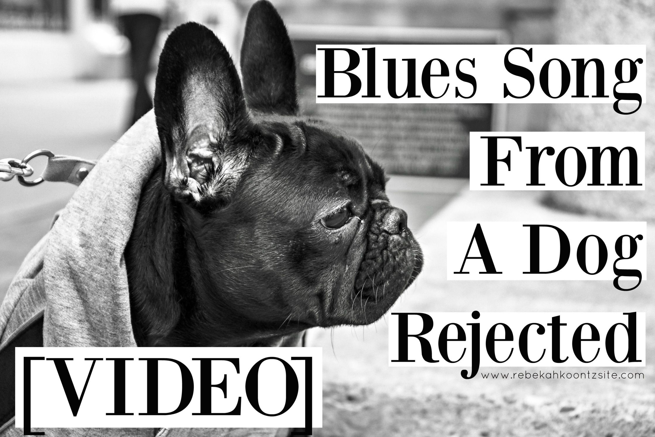 Original Song Blues Song From A Dog Rejected If You Re A Pet