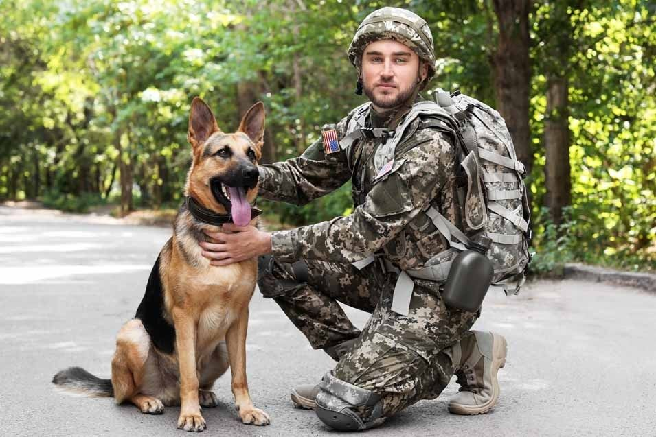 Military Dog Names Military Dogs Dog Names War Dogs