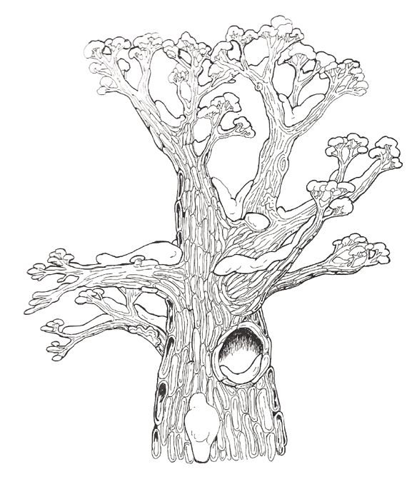 Hollow Tree Top Kleurplaten Kleuren Thema