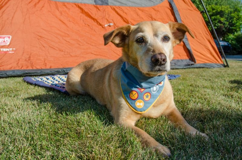 Tips for Road Trips & Camping With Dogs | California beach ...
